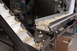 conveyor potstickers