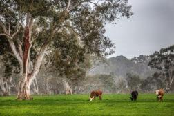 Cargill Teys Australia