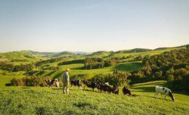 Beef + Namb New Zealand sustainability
