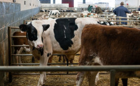The majority of humane handling enforcement actions in 2015 were documented in cattle facilities