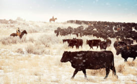 Higher cattle numbers in 2016 resulted in a larger supply of beef and lower prices