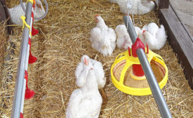 The poultry stunning method called Low Atmospheric Pressure Stunning (LAPS) is gaining support