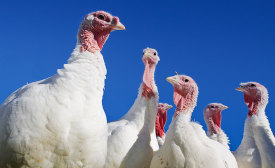 Despite loss of birds due to HPAI and an increase in pricing, turkey consumption in the U.S. is up from 2014