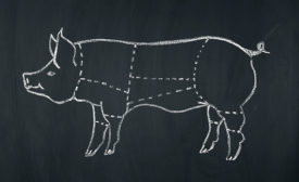 Chalk Drawing of Pig with Separation Lines