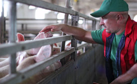 Center for Food Integrity brought consumers to pork producers to