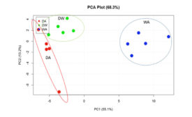 PCA Analysis of Identified Metabolites