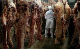 Beef Carcass Inspection