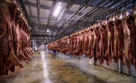 hog carcasses