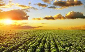 Beautiful farm field and sunset
