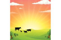 cows, farm picture