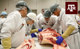 Texas A&M meat science program