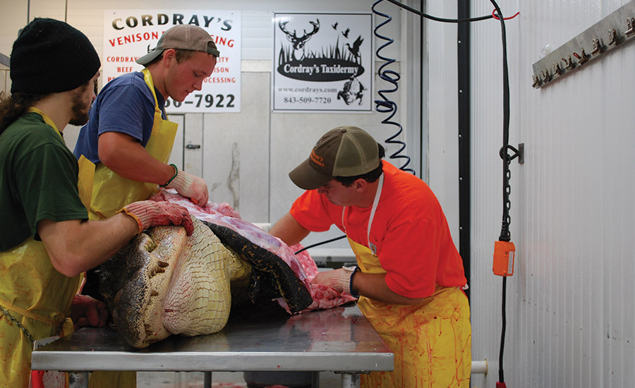 Alligator meat processing