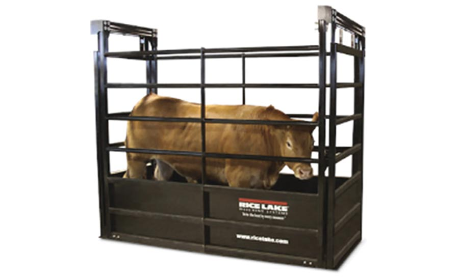 Five important reasons why you must weigh livestock regularly