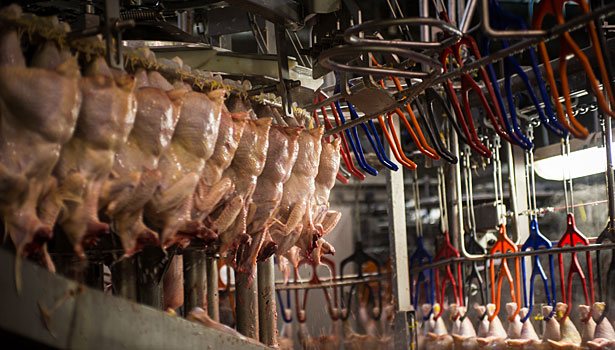 Case Farms, chicken processing, worker safety