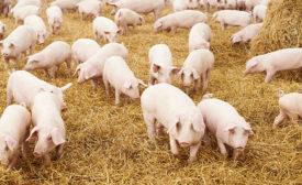 Pork supply