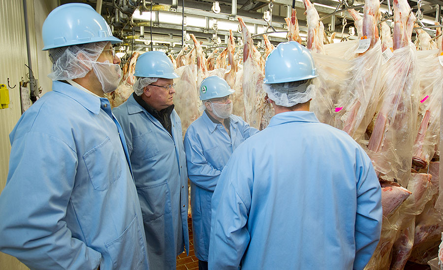 To help prevent E. coli, Marcho Farms bags its veal carcasses during the chilling process