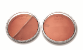 Thermo Fisher plates