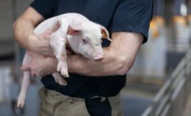 Hamlet Protein Swine Nutrition conference