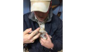 Lamb feeding 900.jpg