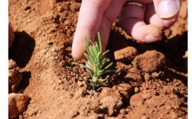 Field-to-Fork Organic Rosemary Solutions from Frutarom 900.jpg