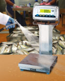 Alliance Scale checkweigher