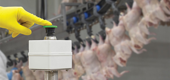 Cryovac chicken automation