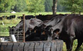 White Oak Pastures processing