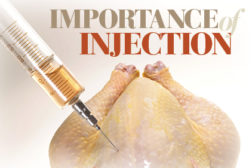 Injection in Poultry
